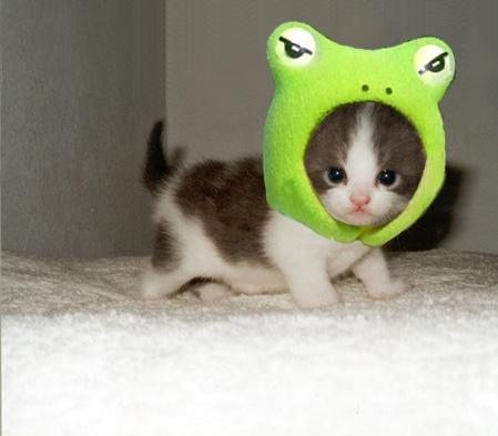 cute cat with a frog hat :)