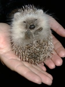 Look, it's a hedgehog. You'll understand why later in the post.