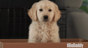 GoDaddy Super Bowl Puppy