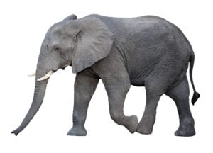 An elephant never forgets. Neither will the potential clients who see your presentations.